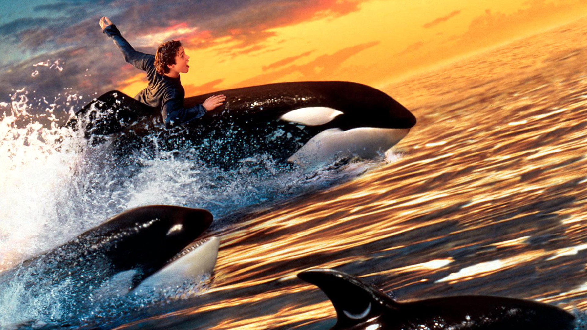 free willy 2 the adventure home full hd wallpaper and