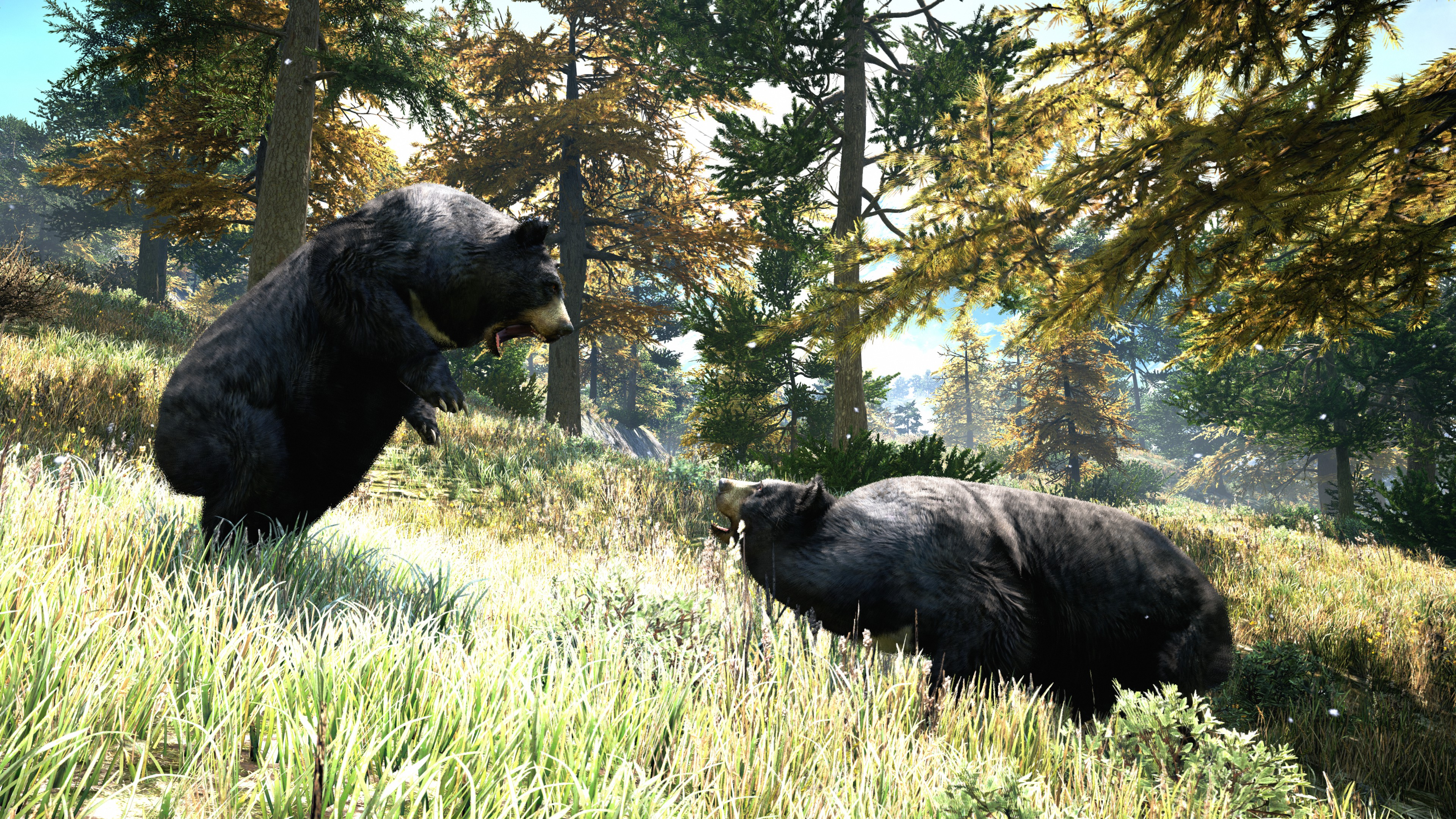 Fighting Bears 4k Ultra Hd Wallpaper Background Image 3840x2160