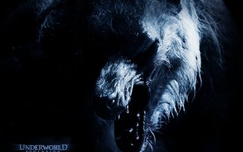 Movie - Underworld: Evolution Wallpapers and Backgrounds ID : 80516