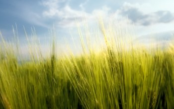 Earth - Grass Wallpapers and Backgrounds ID : 81084