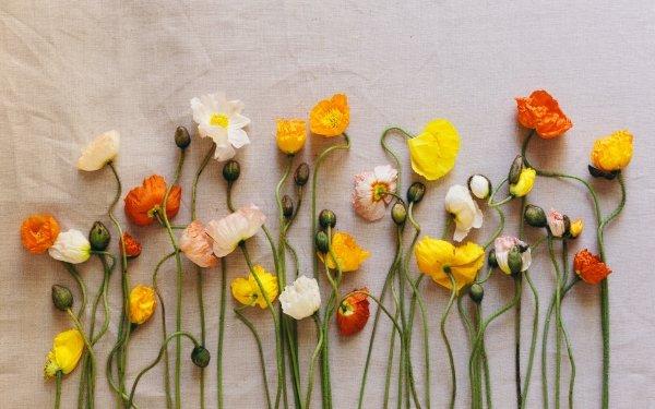 Man Made Flower Poppy White Flower Yellow Flower Orange Flower HD Wallpaper | Background Image