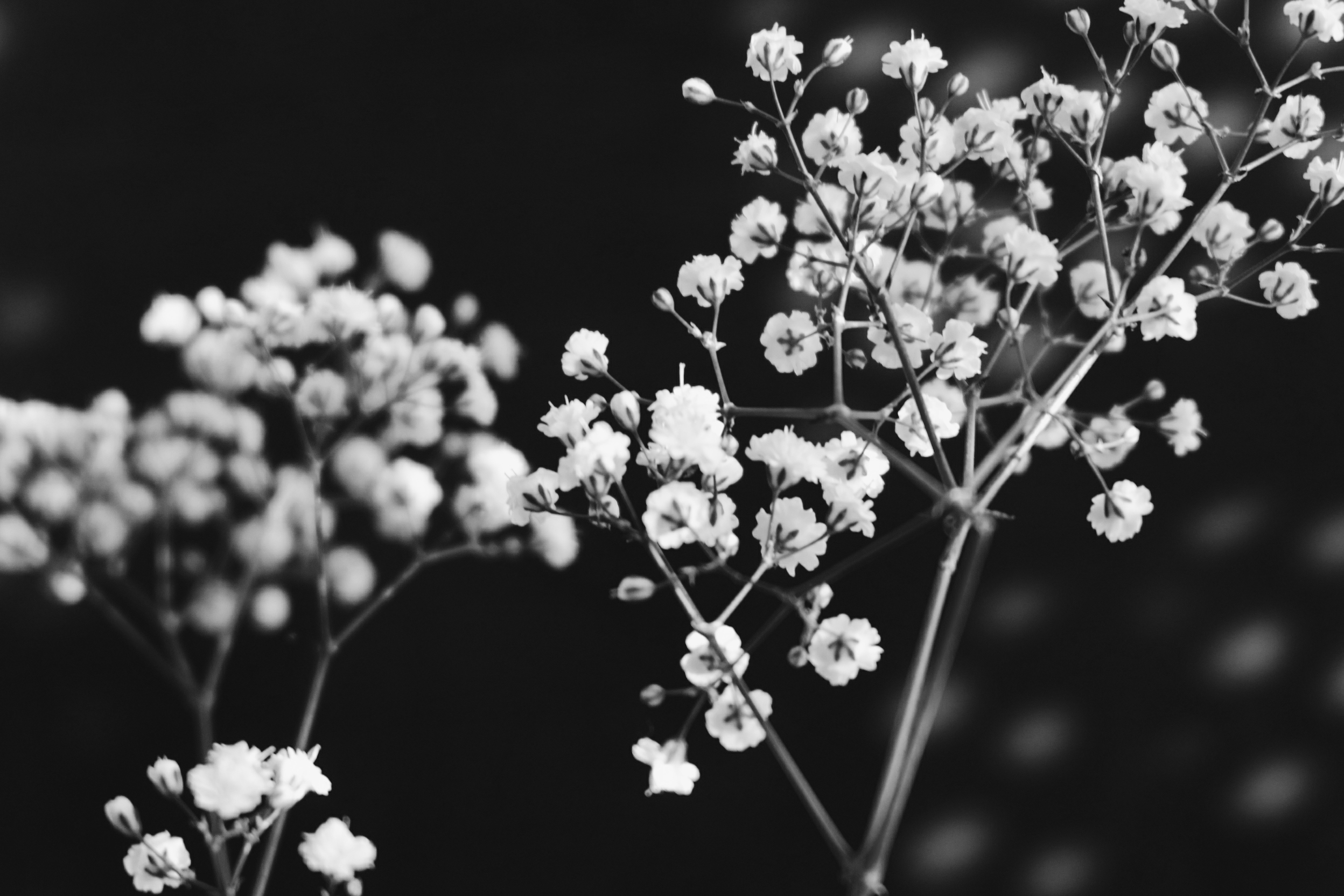 Black white hd wallpaper background image 2496x1664 id820642 wallpaper abyss