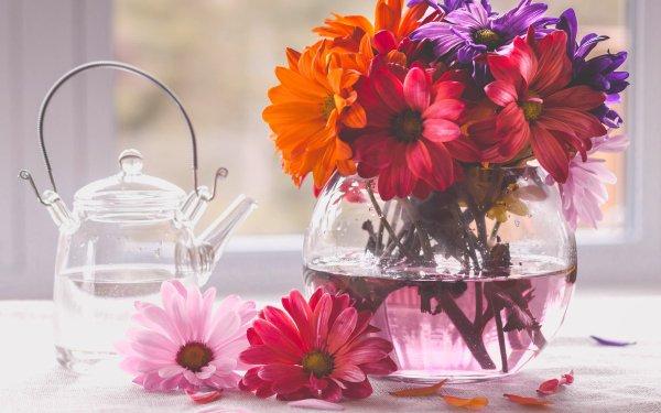 Photographie Nature Morte Fleur Vase Gerbera Fond d'écran HD | Image