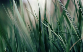 Earth - Grass Wallpapers and Backgrounds ID : 82246