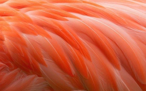 Photography Feather Animal Bird Flamingo orange HD Wallpaper | Background Image