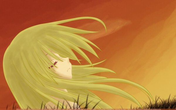 Anime Omamori Himari HD Wallpaper   Background Image