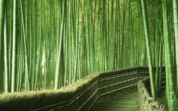 Tierra - Bamboo Wallpapers and Backgrounds ID : 82564