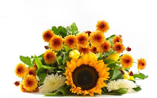 Man Made Flower Sunflower Chrysanthemum Dahlia Spring Yellow Flower HD Wallpaper   Background Image