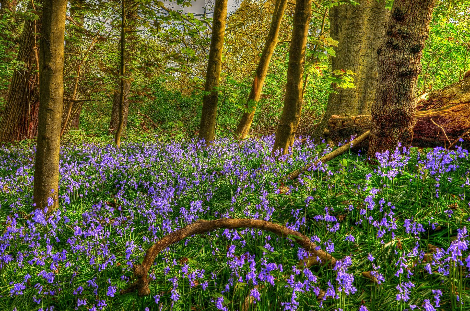 Earth - Spring  Earth Forest Flower Purple Flower Wallpaper