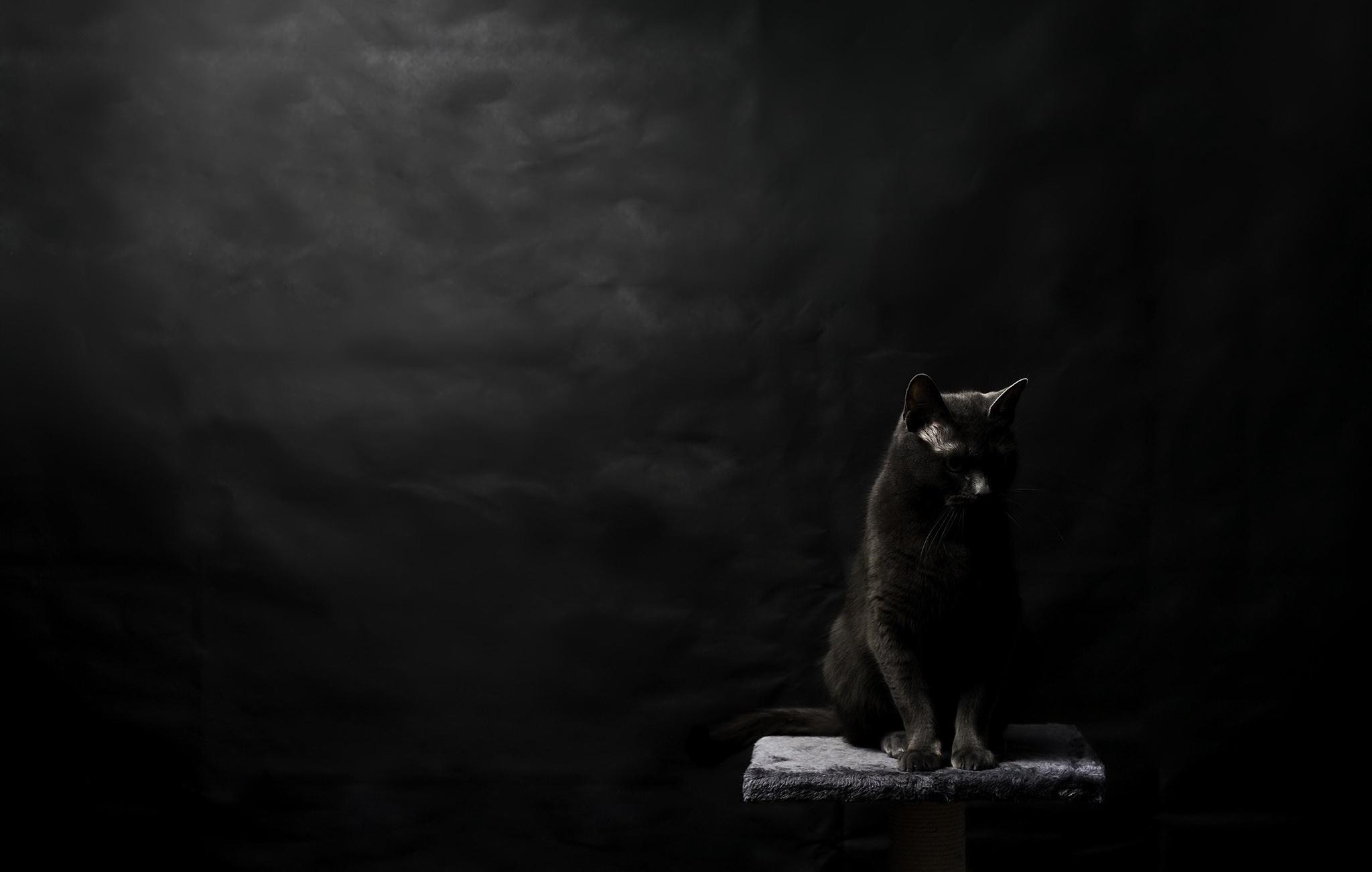 Kot Tapeta Hd Tło 2048x1301 Id850121 Wallpaper Abyss
