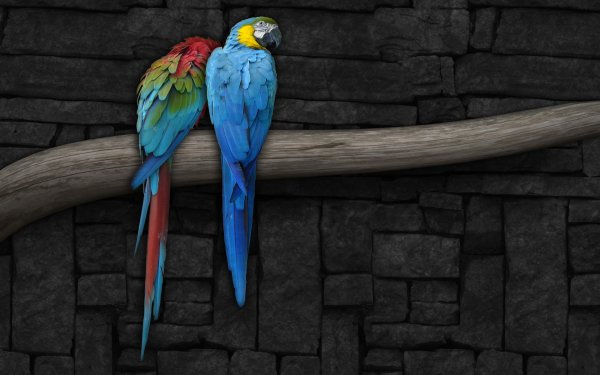 Animales Guacamayo Aves Loros Ave Loro Guacamayo azul y amarillo Ara chloropterus Fondo de pantalla HD | Fondo de Escritorio