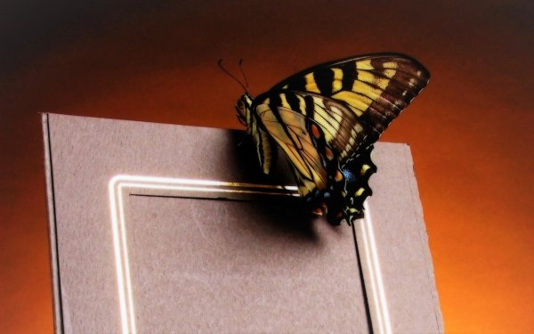 Animal Butterfly Frame HD Wallpaper | Background Image