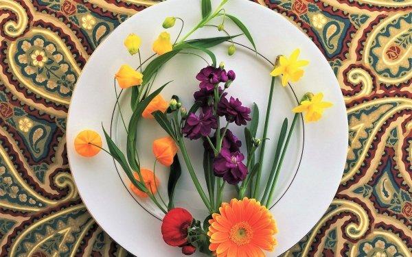 Fotografía Bodegón Plate Flor Colorful Fondo de pantalla HD | Fondo de Escritorio