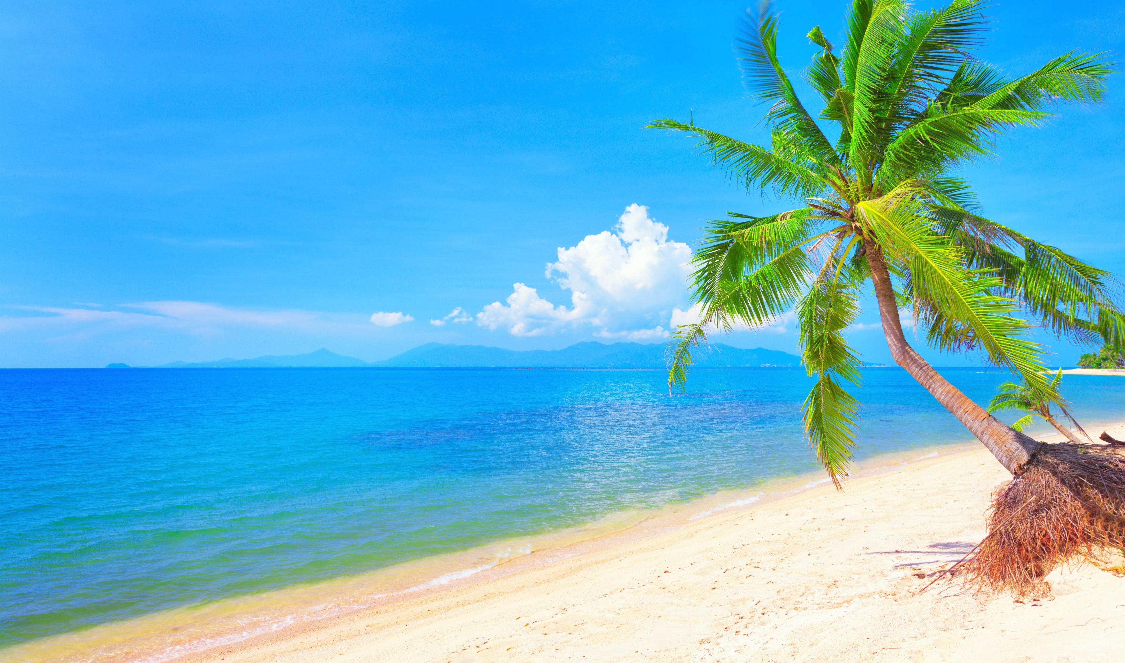 Shore Palms Tropical Beach 4k Hd Desktop Wallpaper For 4k: Tropical Beach 4k Ultra HD Wallpaper