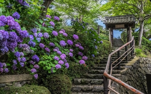 Man Made Stairs Steps Park Spring Flower Hydrangea Purple Flower HD Wallpaper | Background Image