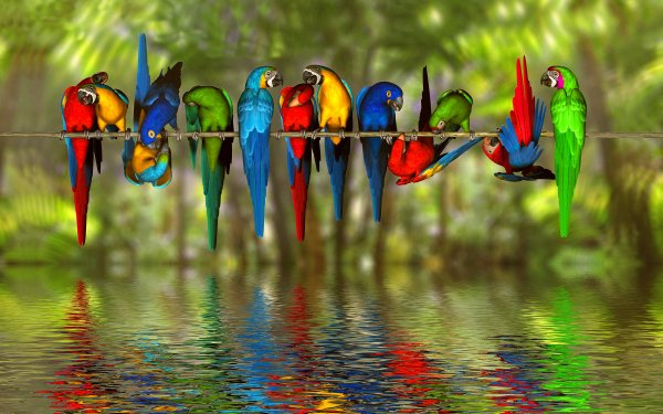 Animal Macaw Birds Parrots Bird Colors Colorful Water Reflection Blue-And-Yellow Macaw Hyacinth Macaw Scarlet Macaw HD Wallpaper   Background Image