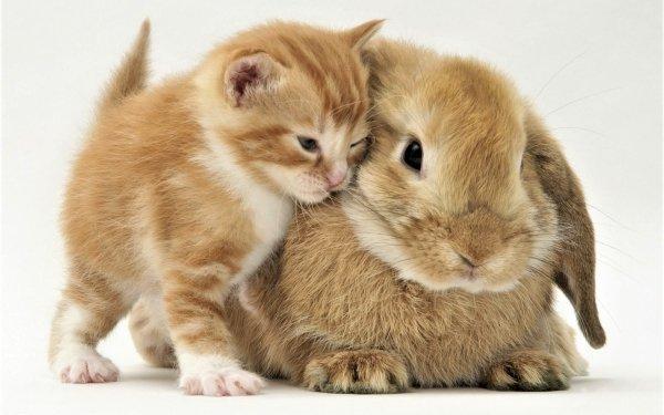 Animal Cute Kitten Rabbit Close-Up Friend Baby Animal Pet HD Wallpaper | Background Image
