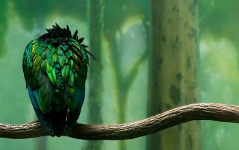 Animal - Bird Wallpapers and Backgrounds ID : 87838