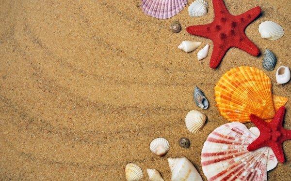 Earth Shell Sand Starfish HD Wallpaper   Background Image