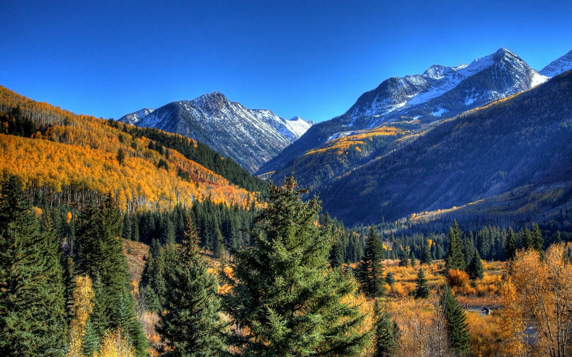 Earth - Landscape  Hill Leaf Fall Bush Grass Mountain Forest Tree Wilderness Sky Photography Snow Wallpaper