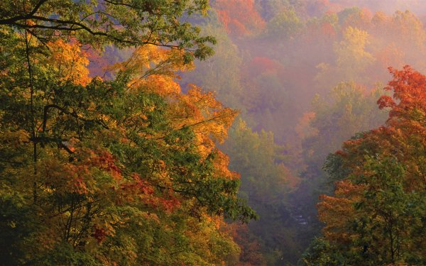 Earth Forest Fall Ohio Foliage HD Wallpaper   Background Image