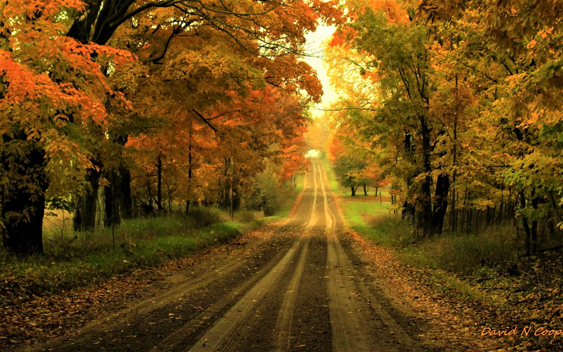 Autumn Road Wallpaper And Background Image