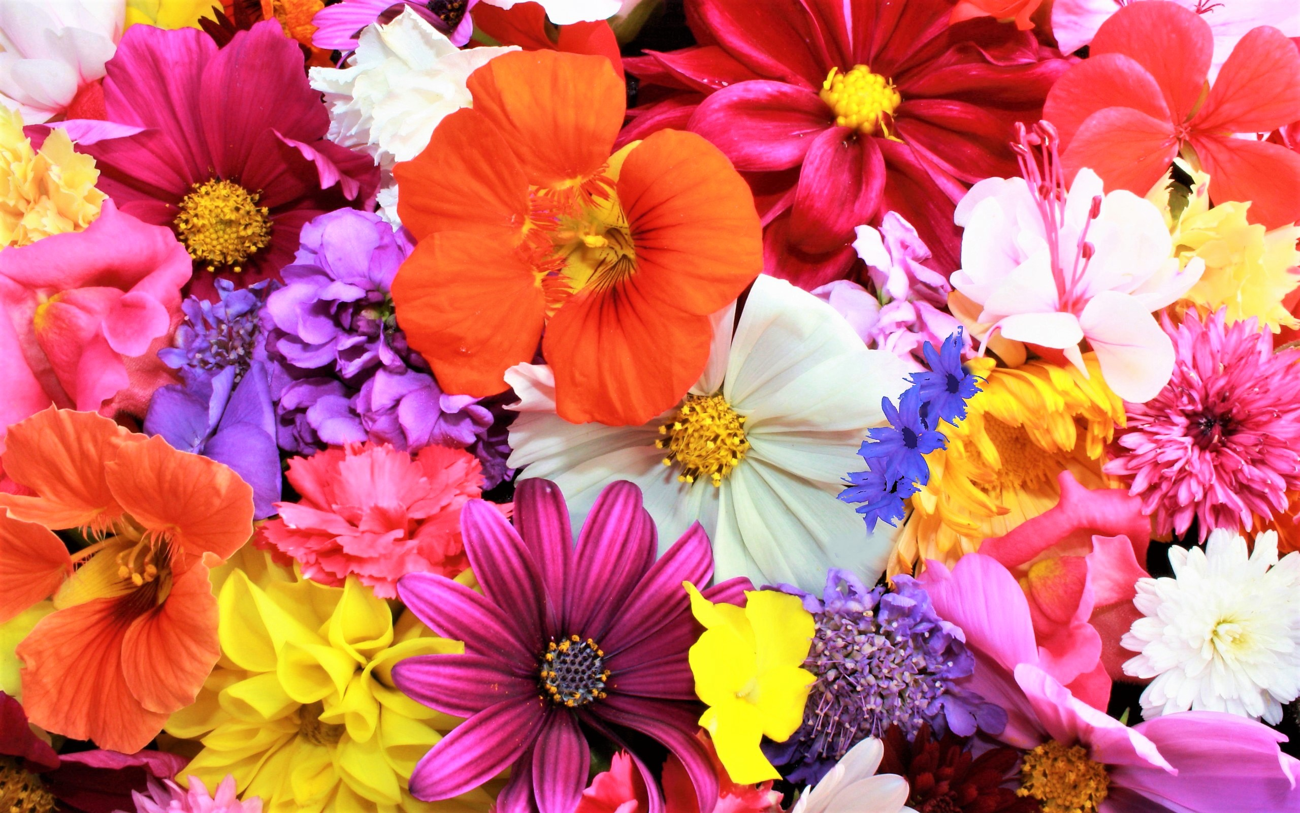 Colorful Flowers HD Wallpaper | Background Image | 2560x1600 | ID ...