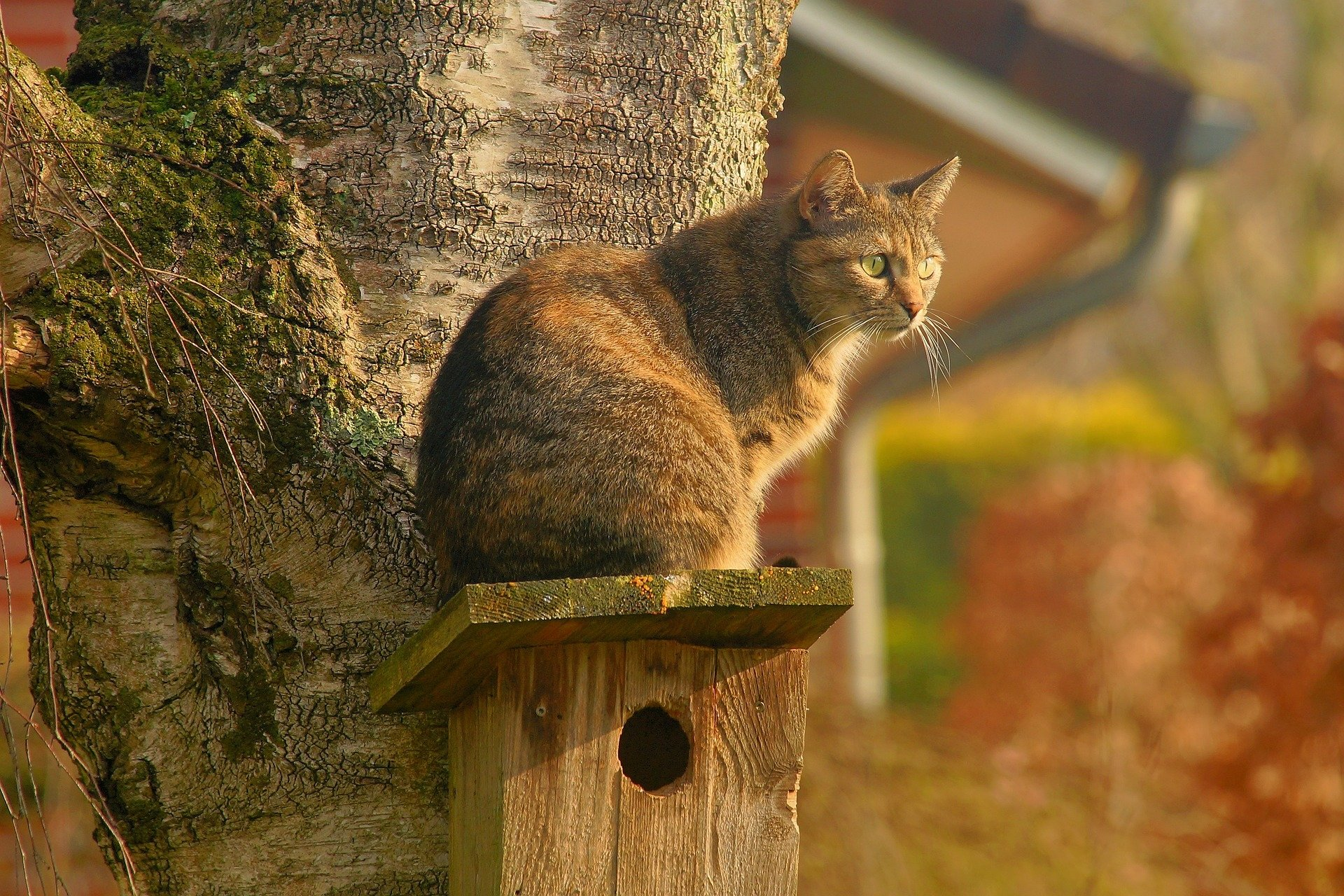 Animal - Cat  Bird House Pet Wallpaper