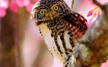 Animal - Owl Wallpapers and Backgrounds ID : 89336