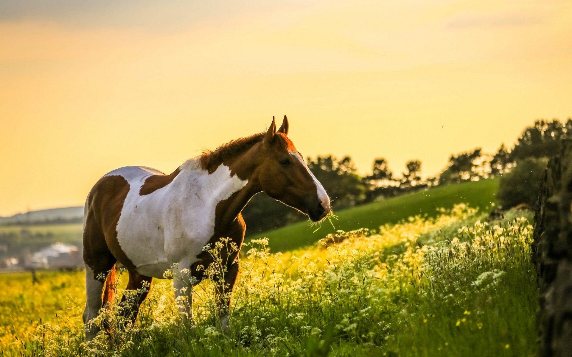 Лошадь HD Обои | Фон | 2327x1474 | ID:787511 - Wallpaper Abyss | 1200x1920