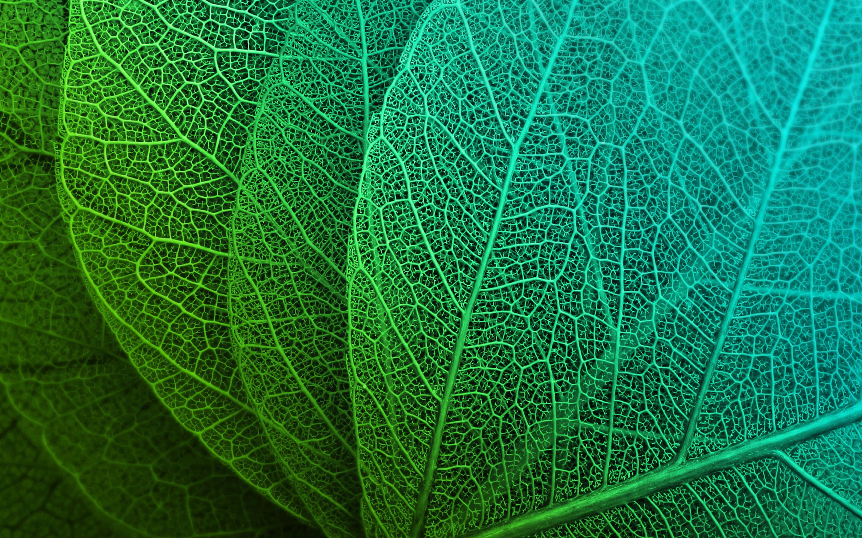 Green Leaf Fondo De Pantalla Hd Fondo De Escritorio