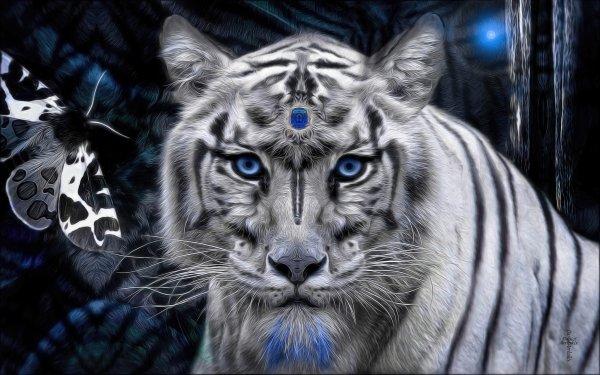 Fantasy Tiger Fantasy Animals Blue Eyes White Tiger Stare HD Wallpaper   Background Image