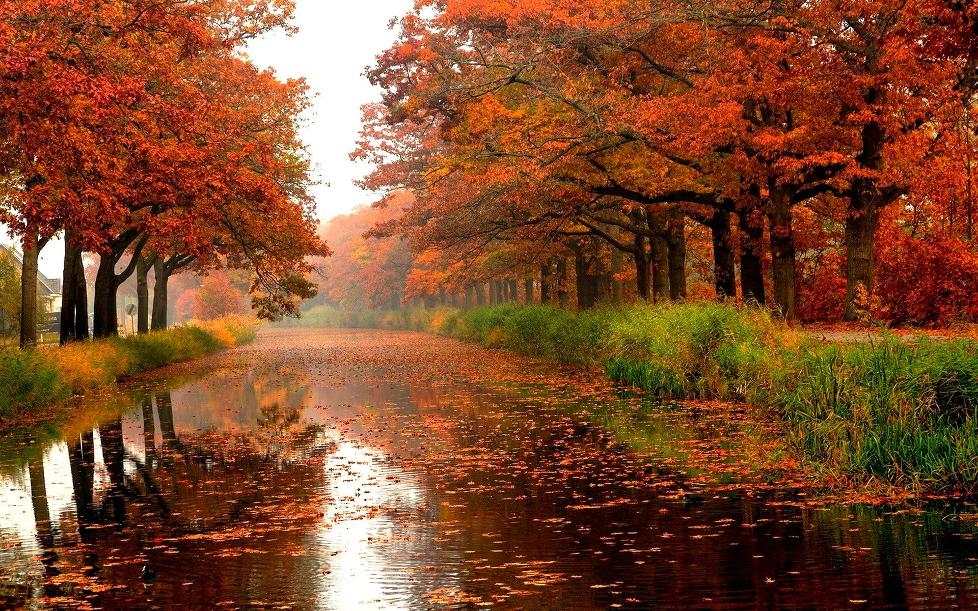 Autumn River Full HD Wallpaper And Background Image