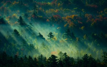 198 4k Ultra Hd Forest Wallpapers Background Images Wallpaper Abyss