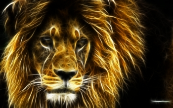 Animal - Lion Wallpapers and Backgrounds ID : 93466