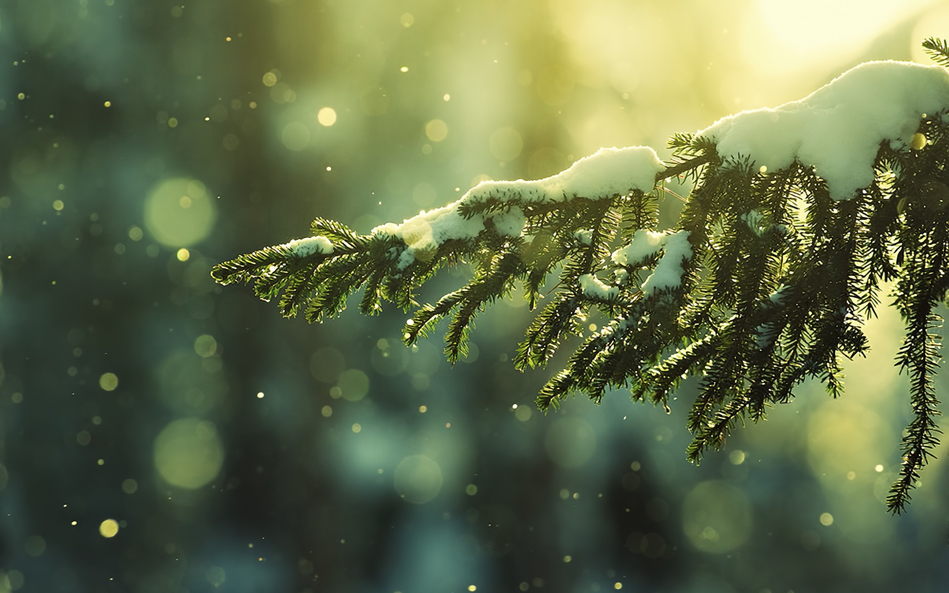 Winter Hd Wallpaper Background Image 1920x1200 Id