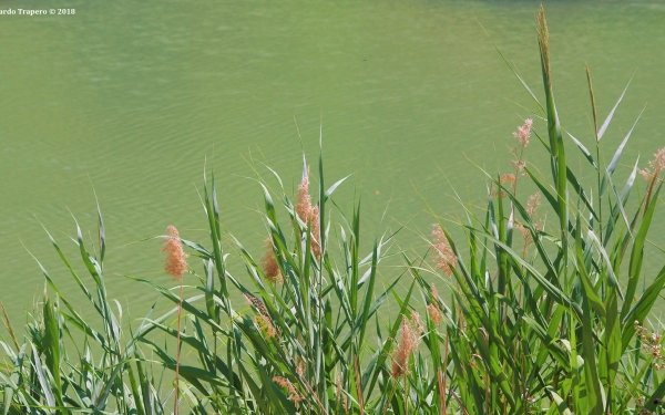 Earth River Nature Water Spain Reed HD Wallpaper | Background Image