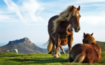 Animal - Horse Wallpapers and Backgrounds ID : 94378