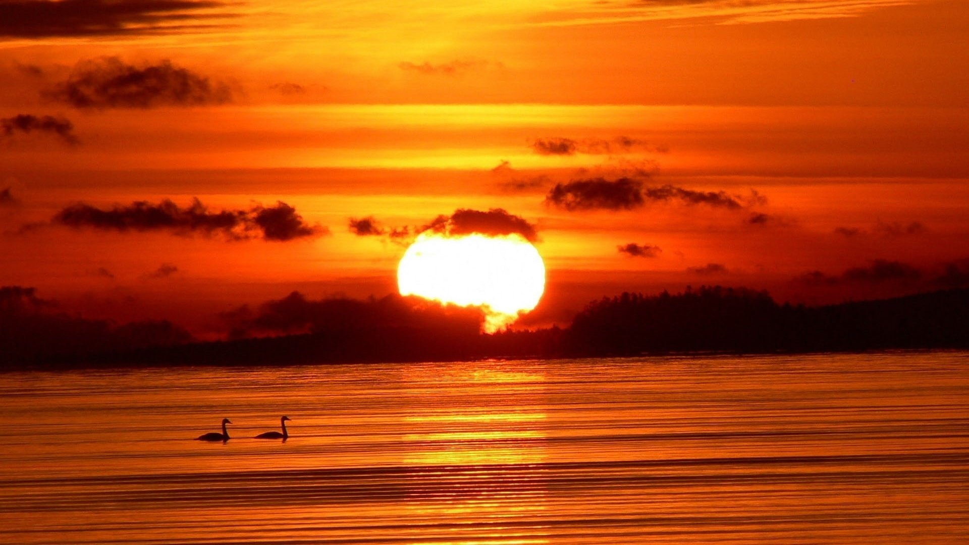 Earth - Sunset  Red Lake Bird Sun Wallpaper