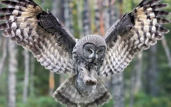 Animal - Owl Wallpapers and Backgrounds ID : 95574