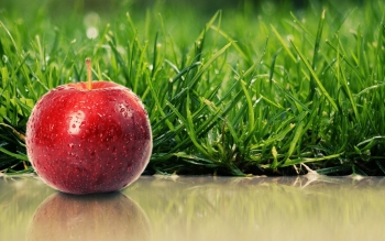 Alimento - Apple Wallpapers and Backgrounds ID : 96374