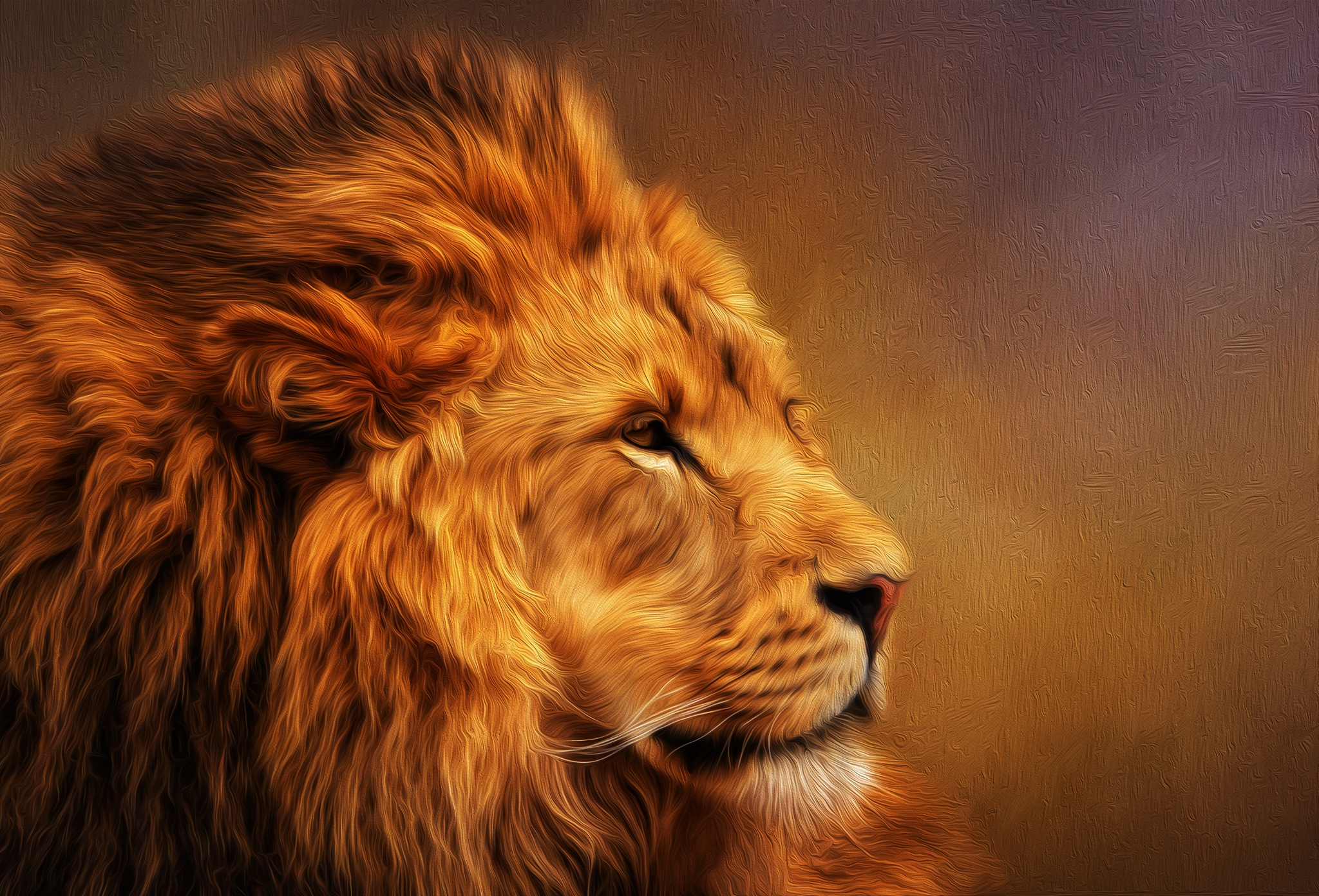 Lion Hd Wallpaper Background Image 2048x1392 Id975729